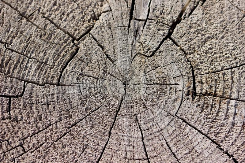 Rustic weathered radial wood grain background. Rustic weathered radial wood grain texture background royalty free stock photo