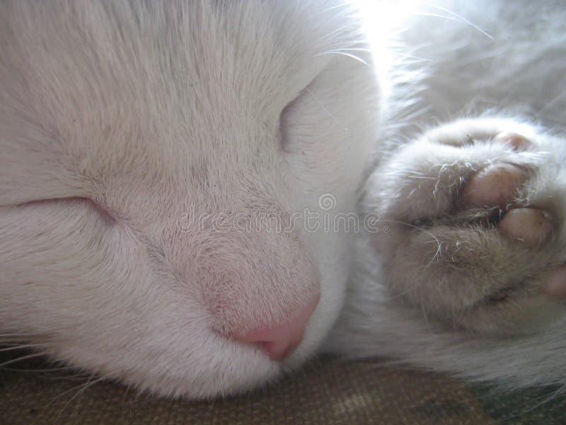 Rustic white cat fast asleep stock photos