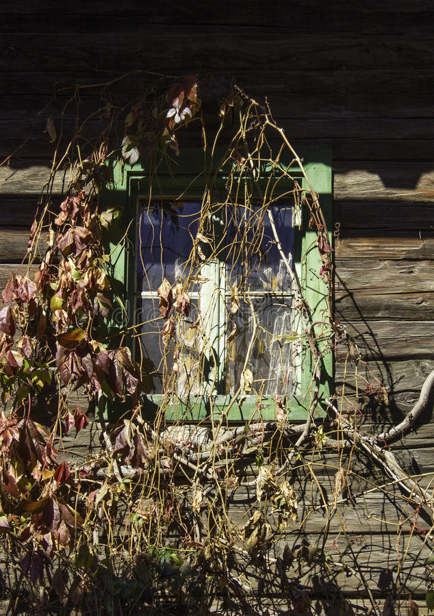 A rustic window with vines stock photo