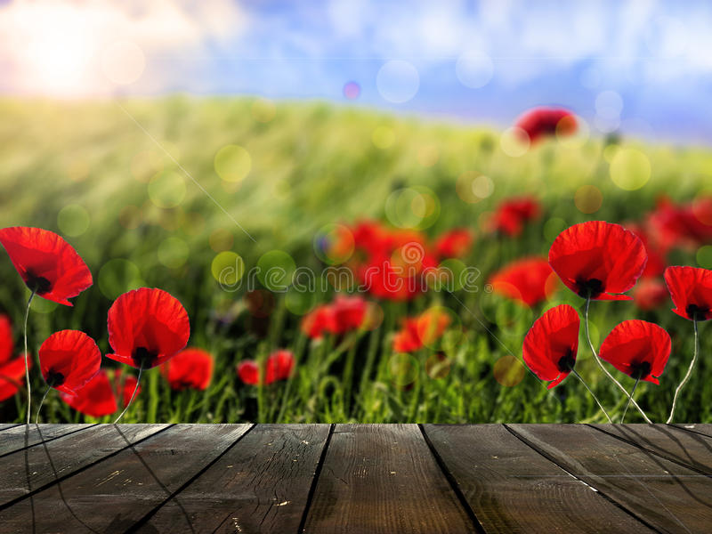 Rustic wood boards in front of wheat field and poppy flowers royalty free stock image