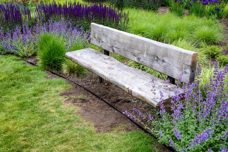 Rustic wood garden bench surrounded by ornamental grasses and the blooming purple flowers of salvia and catmint royalty free stock images