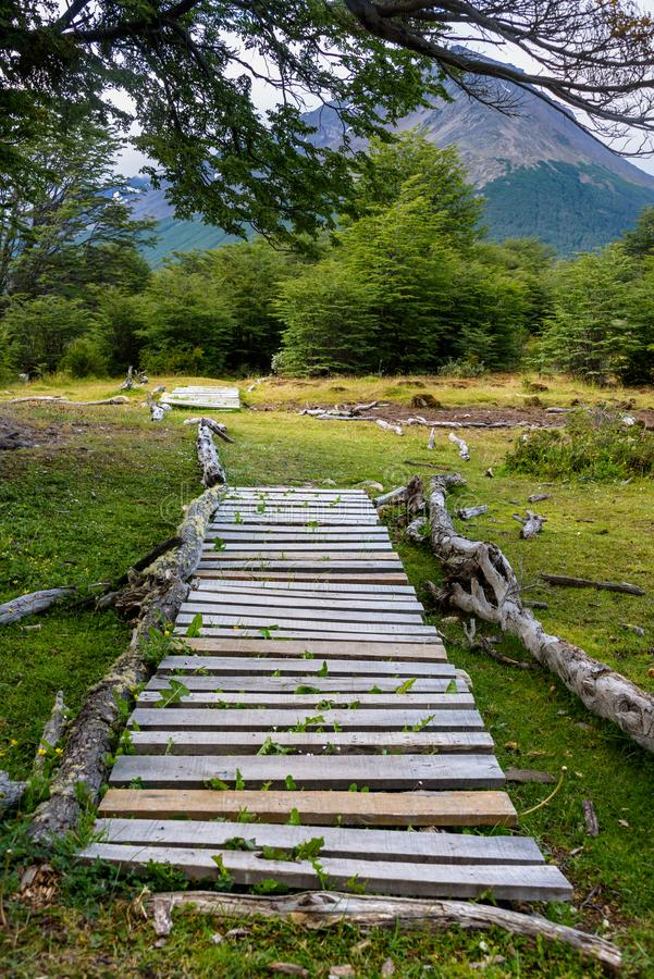 Rustic wood path through marshy area, leading to wooded trail, in Cerro Alarken Nature Reserve royalty free stock photo