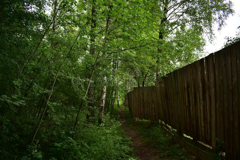 Rustic wooden fence of boards bordered by a dense forest, a trail in the woods along. The fence stock photos