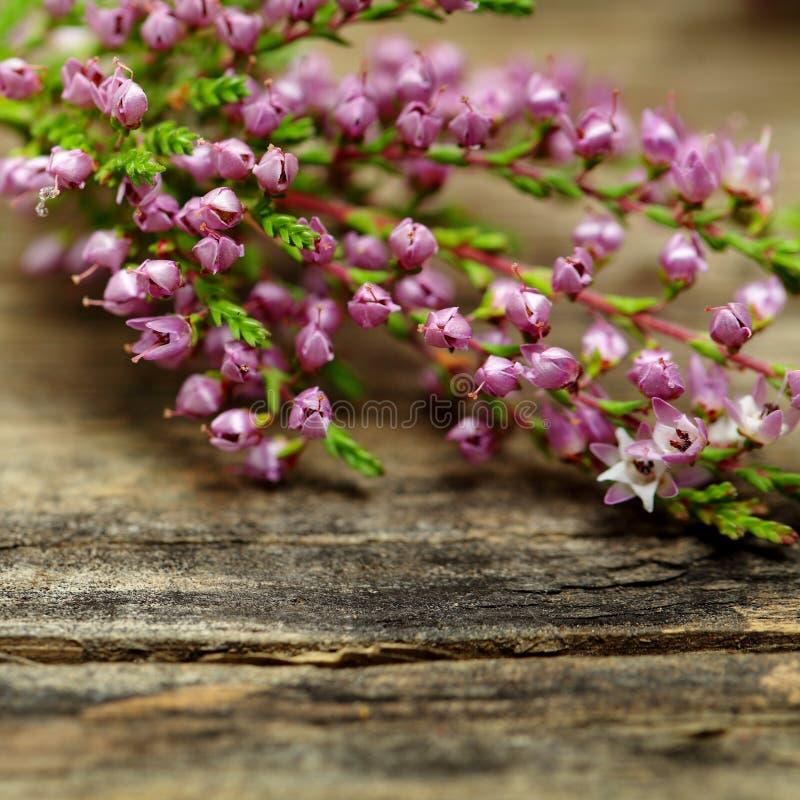 Rustieke bloem, macro stock fotografie