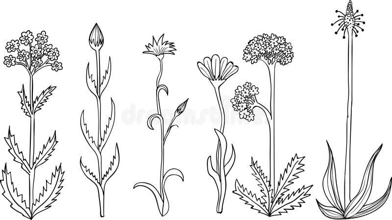 Rustieke installaties en bloemen Hand getrokken reeks stock illustratie