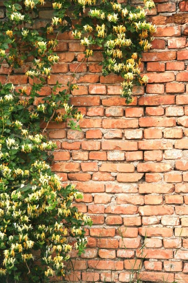 Rustieke muur royalty-vrije stock afbeeldingen