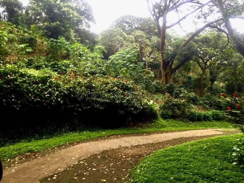 Rustieke weg in een tropisch land stock fotografie