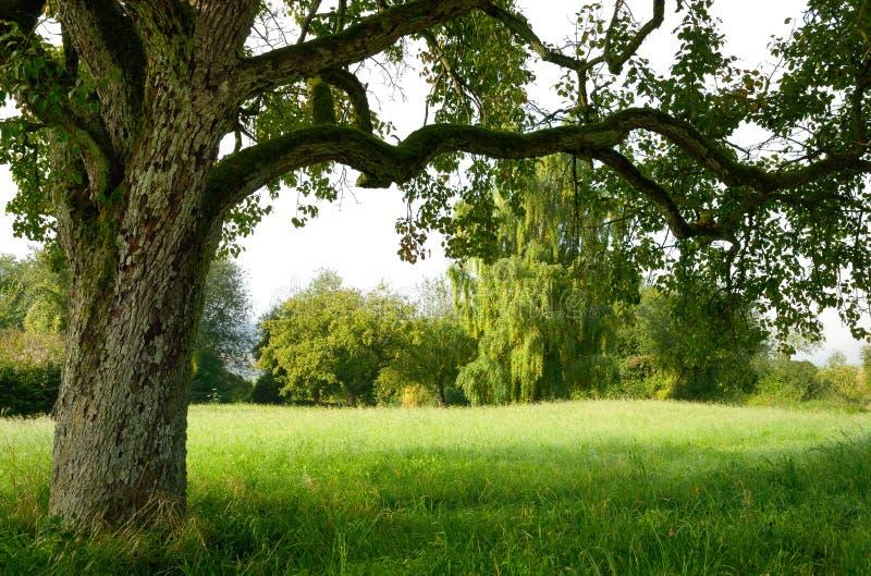 Rustig landschap dat door een boom wordt gegrenst royalty-vrije stock afbeeldingen