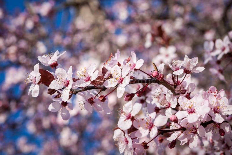 Rustig park met een vijver en wildflowers royalty-vrije stock afbeelding