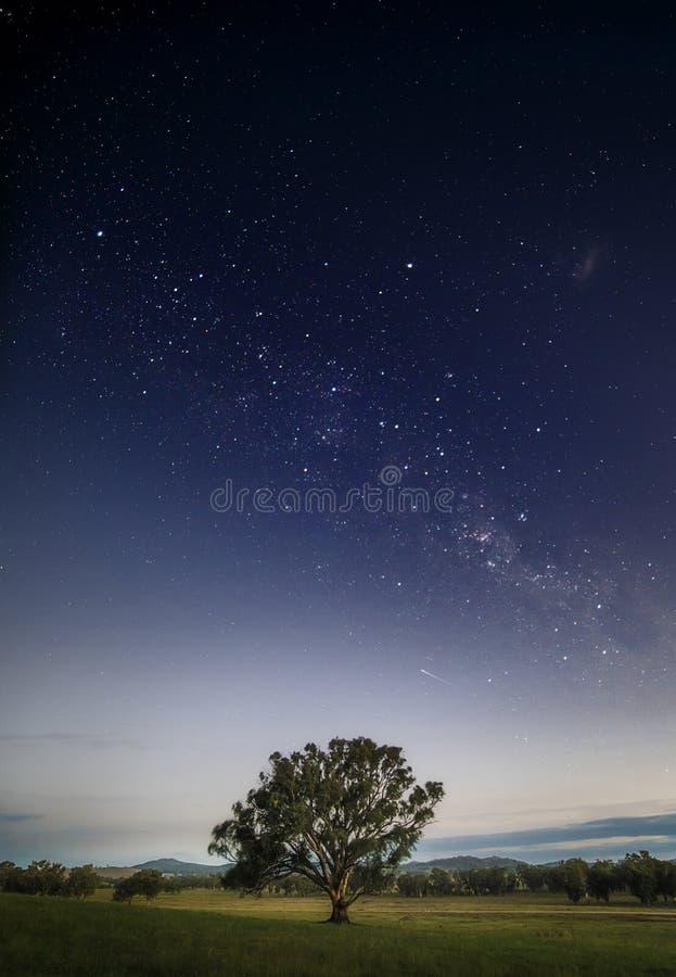 Rustige eenzame boom op een gebied onder de Melkweg bij nacht met een atmosfeer kalmte in medio ten westen van Nieuw Zuid-Wales royalty-vrije stock foto