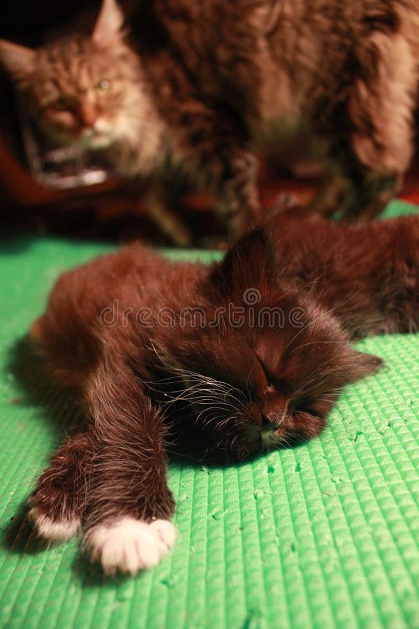 rustige katjesslaap stock fotografie