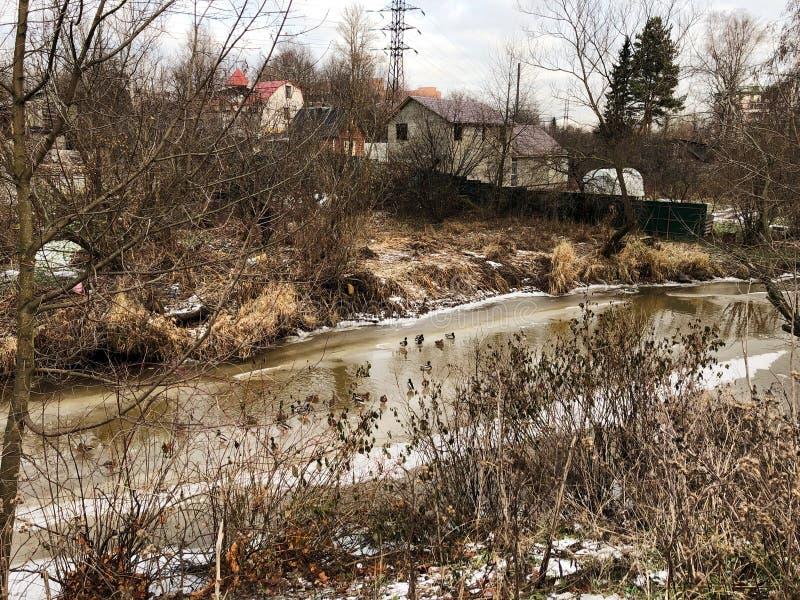 Rustikale Ansicht des Flusses und der Enten stockfotos