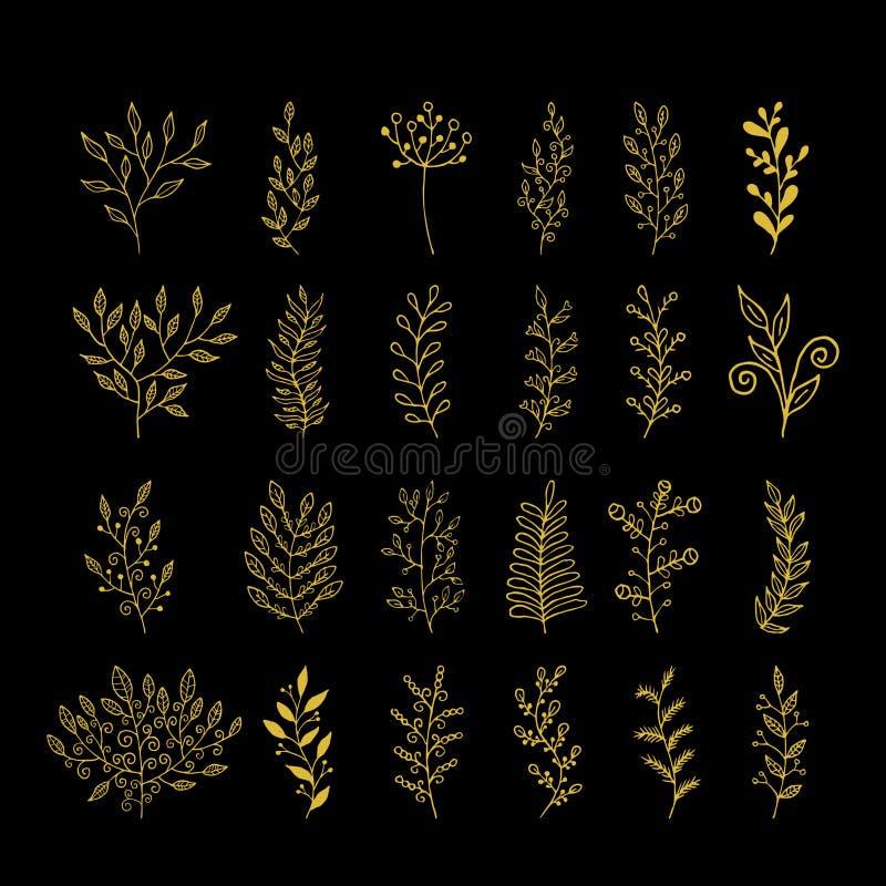 Rustikale Zierpflanzesammlung Hand gezeichnete Vektorgestaltungselemente stock abbildung