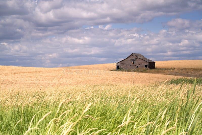Rustikaler Stall auf einem Bauernhofgebiet. stockfotografie