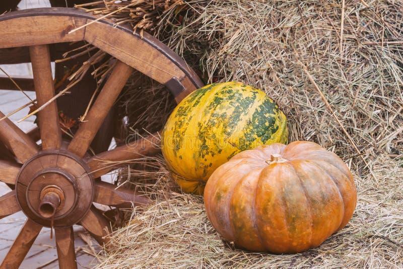 Rustikaler Weinleseherbst, Fallhintergrund mit reifen großen gewellten Kürbisen auf Stroh nahe hölzernem Rad des Warenkorbes, Wei stockfotos