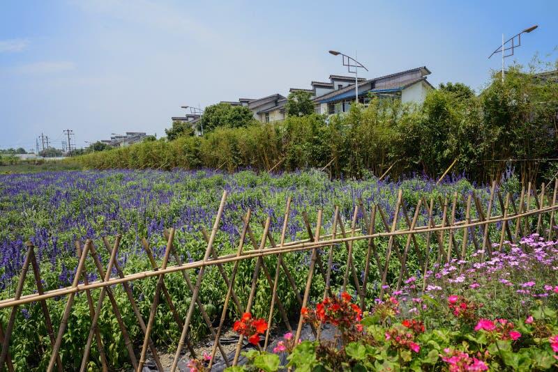 Rustikales Bambusfechten auf dem blühenden Lavendelgebiet stockfoto