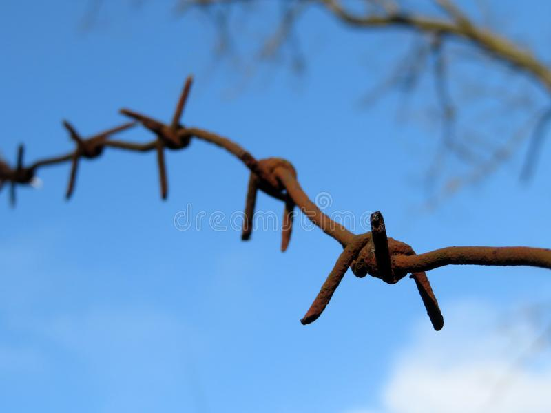 Rusty barbed wire on background of blue sky with clouds and bare branches. Concept of boundary, prison, freedom, immigration in spring, military camp royalty free stock photos