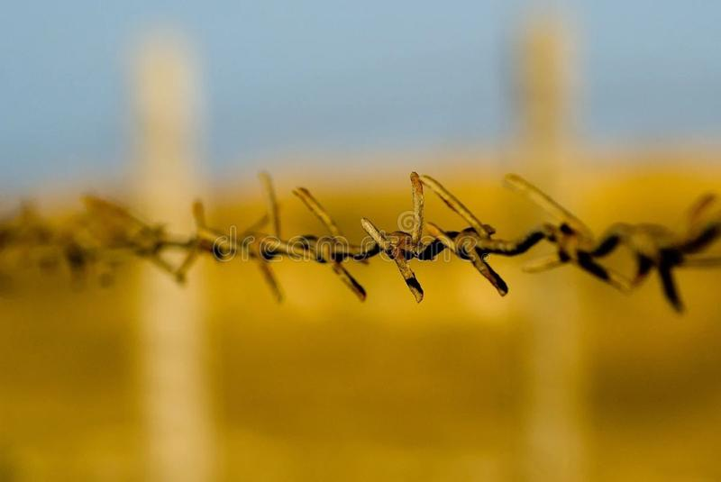 Rusty Barbed Wire Fence Enclosing Yellow Field. With planted crops royalty free stock photo