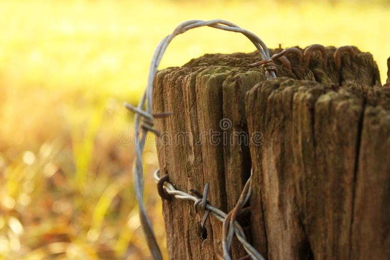 Rusty barbed wire on old post - very shallow depth of focus with Autumn or winter yellow background stock images