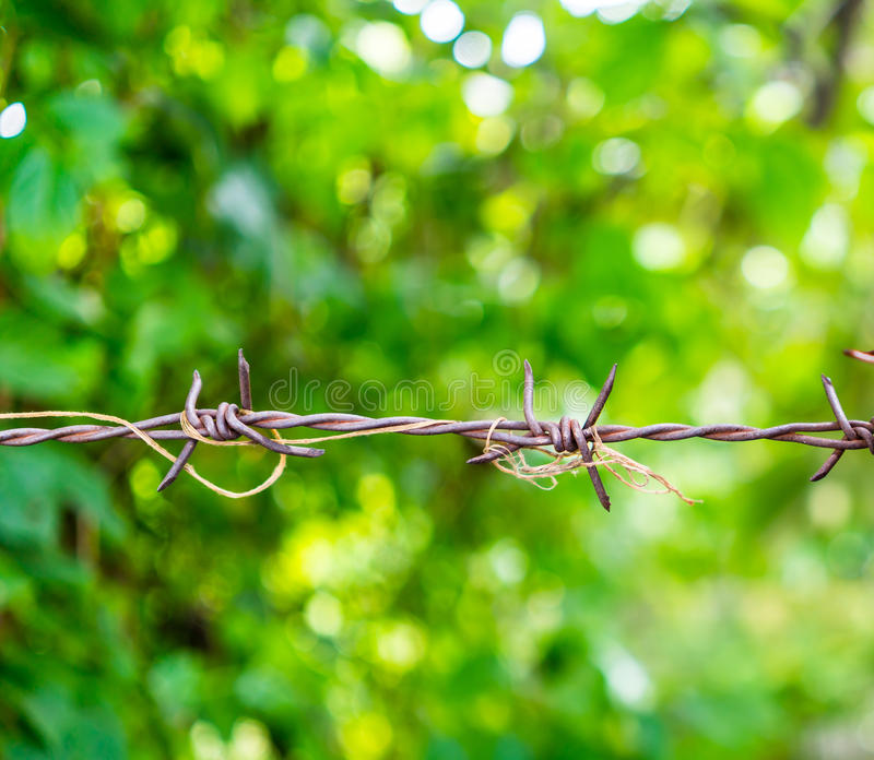 Rusty barbed wire spike twisted with old rope against green bokeh background. Freedom behind the barrier royalty free stock photo
