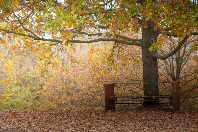 Rusty bench under a tree in autumn royalty free stock images