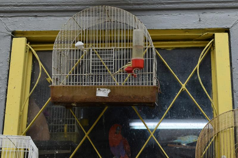 Rusty bird cage window and parrot royalty free stock images