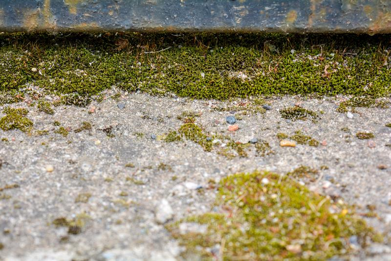 Rusty cast iron rod, old weathered concrete surface covered with green moss royalty free stock image