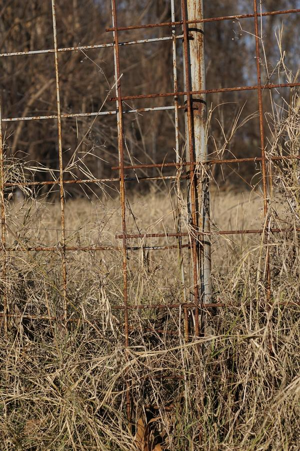 Rusty fence c. Rusty fence made of wire for concrete floor work. High grass royalty free stock photo