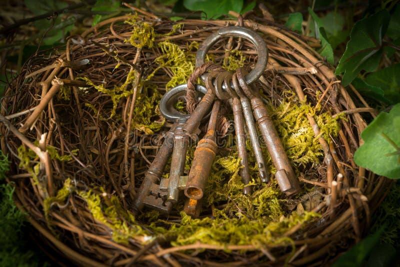 Rusty keys in nest. Old rusty keys lying in an abandoned bird`s nest stock photos