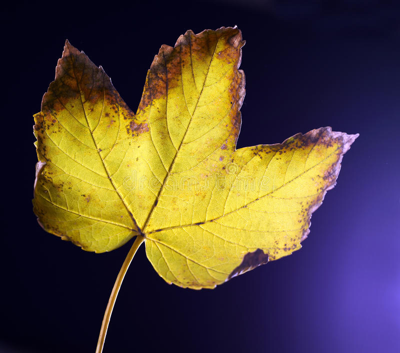 Download Rusty leaf stock photo. Image of photosynthesis, macro - 23216200