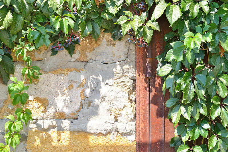 Rusty metal door, a stone wall and plant stock photography