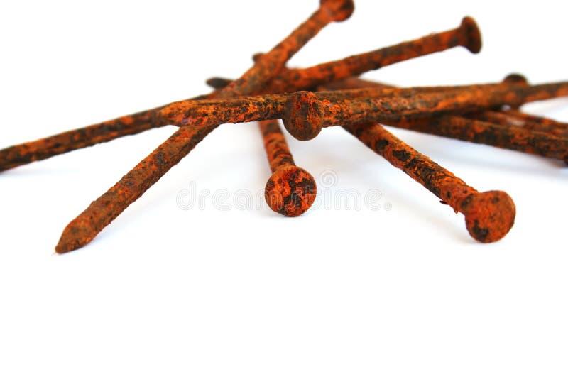 Rusty nail royalty free stock image