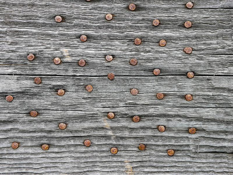 Rusty nails in aged pine wood board close up shot stock photo