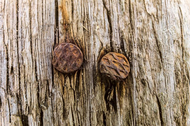 Rusty nails in old wooden board close-up stock photos