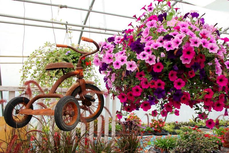 Rusty Old Vintage Tricycle Hanging avec des fleurs en serre chaude images stock