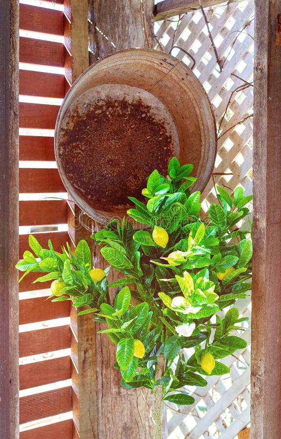 Rusty Tub And Lemon Tree Corner Decoration In Quaint Country Cafe. An old rusted tub and an artificial lemon tree in the sunlit corner of a quaint retro country royalty free stock photography