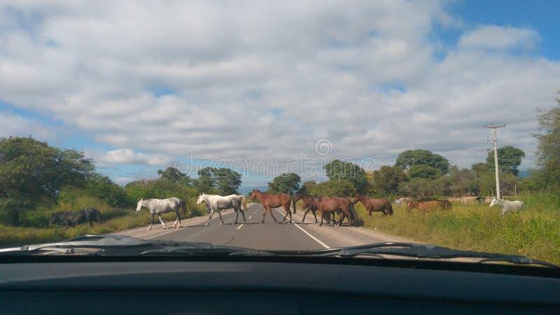 Ruta de La d'en de Caballos un Cafayate, Salta - Argentine photographie stock