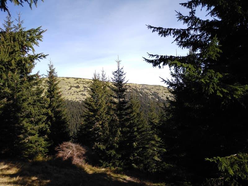 Ruta de la montaña para montar Sinyak de Bukovel Gorgany, Cárpatos ucranianos imágenes de archivo libres de regalías