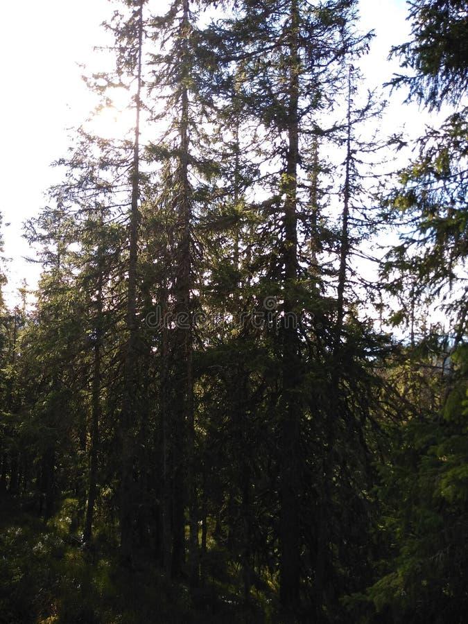 Ruta de la montaña para montar Sinyak de Bukovel Gorgany, Cárpatos ucranianos fotografía de archivo libre de regalías
