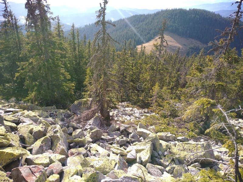 Ruta de la montaña para montar Sinyak de Bukovel Gorgany, Cárpatos ucranianos foto de archivo libre de regalías