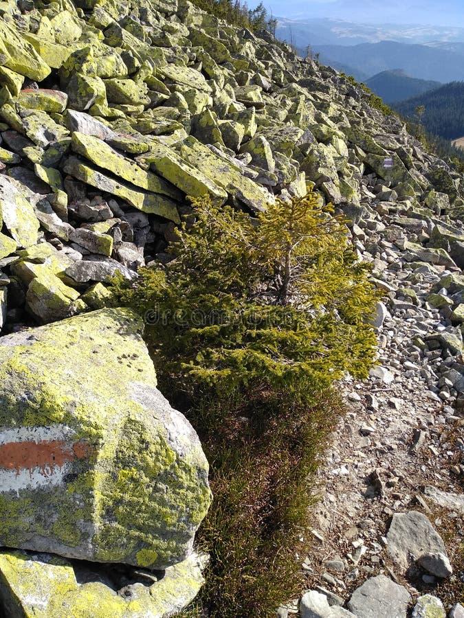 Ruta de la montaña para montar Sinyak de Bukovel Gorgany, Cárpatos ucranianos imagen de archivo libre de regalías