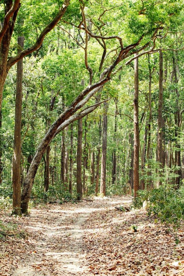 Ruta de la pista del fango a través del bosque denso de Jim Corbett foto de archivo
