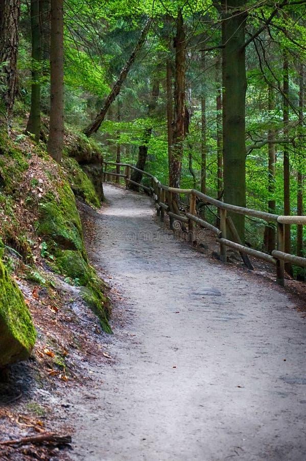 Ruta en el bosque verde foto de archivo libre de regalías