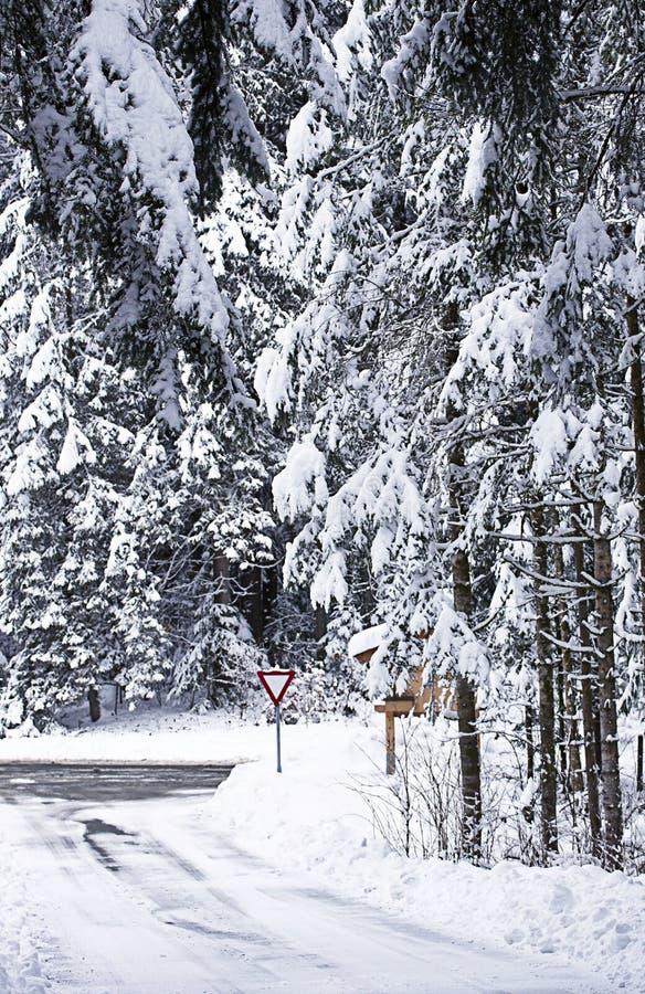 Rutas nevadas de la travesía flanqueadas por la madera de pino imagenes de archivo