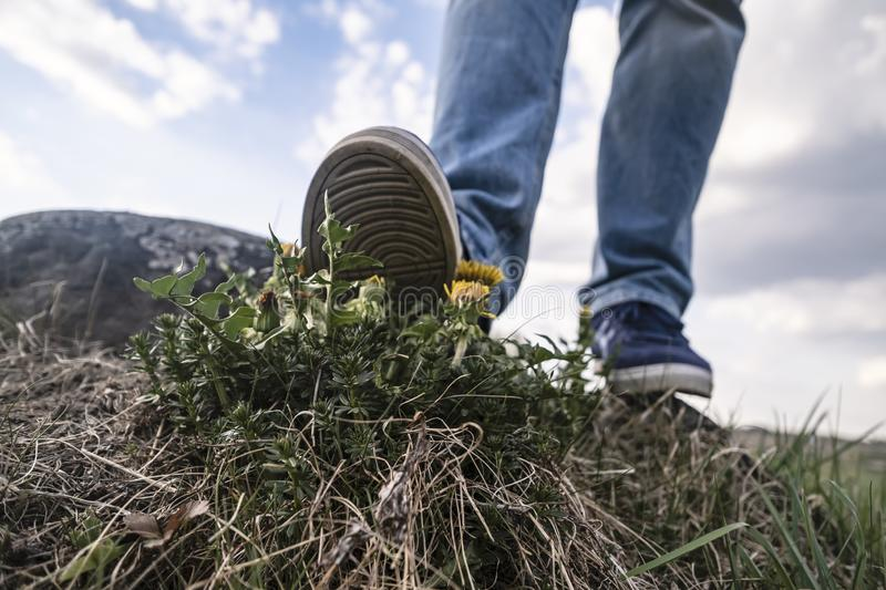 Ruthless leg of a man tries to step on the defenseless yellow dandelion Taraxacum against the sky and clouds. View from the royalty free stock images
