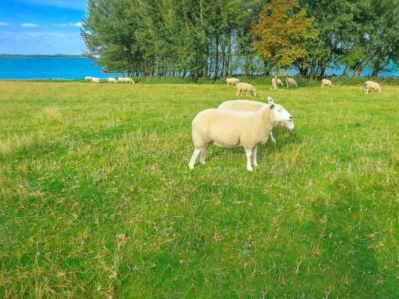 Rutland Water Nature Reserve. stock photo