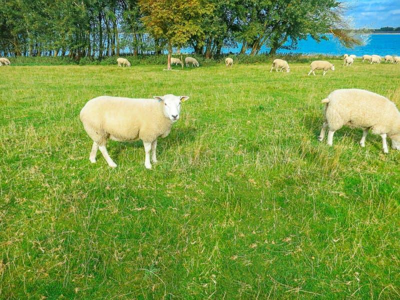 Rutland Water Nature Reserve royalty free stock image