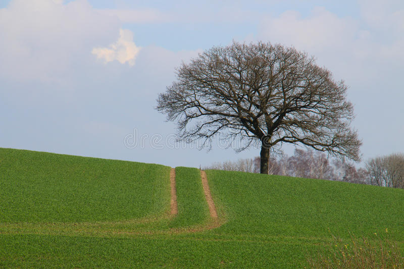 Ruts on green field. With a tree on the other side of the hill royalty free stock image