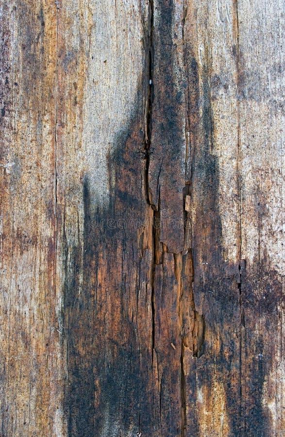 rutten tree arkivfoto