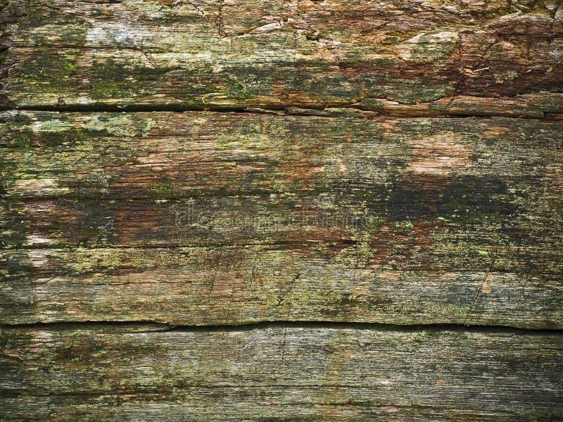 ruttet trä arkivbilder